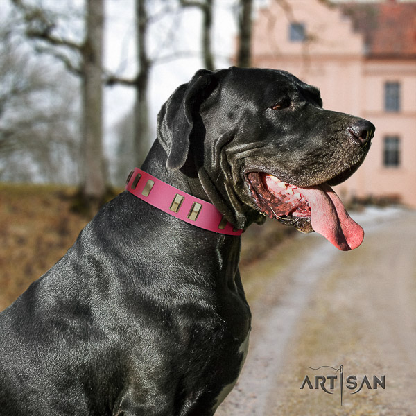 Great Dane comfortable wearing full grain genuine leather collar with adornments for your doggie