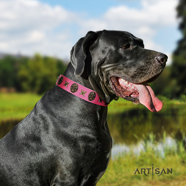Great Dane comfortable wearing natural leather collar with adornments for your four-legged friend
