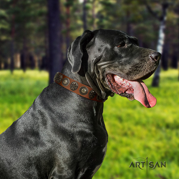 Great Dane daily walking full grain natural leather collar with embellishments for your doggie