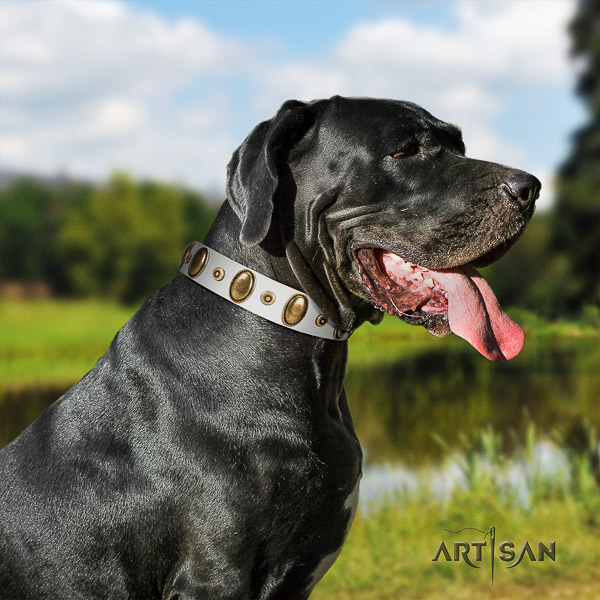 Great Dane stylish walking leather collar with studs for your dog