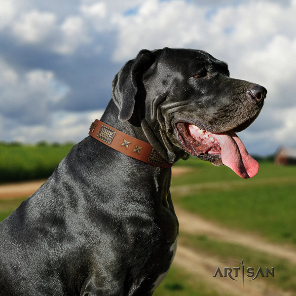 Great Dane studded full grain leather collar with corrosion resistant hardware