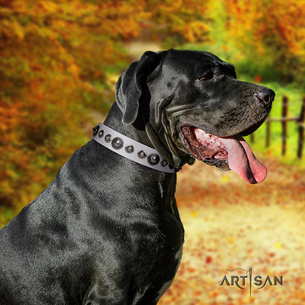 Great Dane perfect fit collar with inimitable adornments for your pet