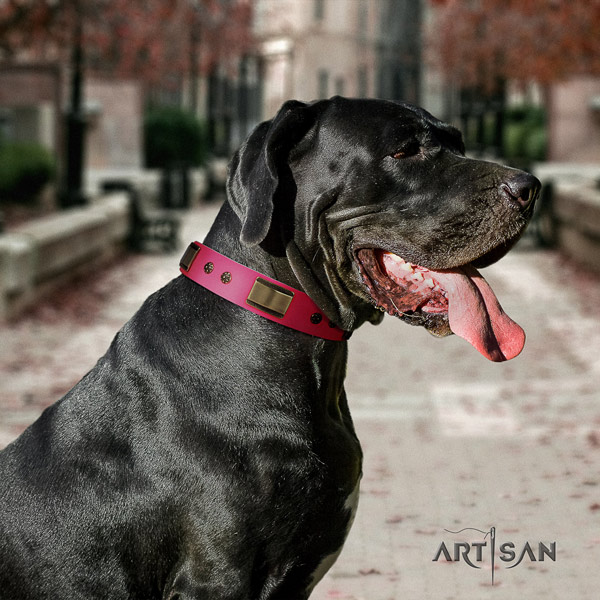 Great Dane fine quality leather collar with rust-proof d-ring
