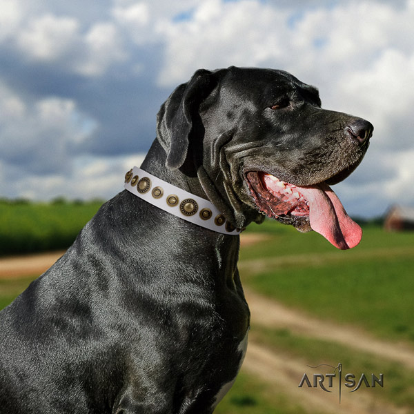 Great Dane fine quality collar with amazing adornments for your dog
