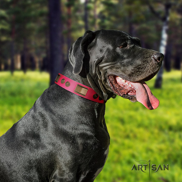 Great Dane decorated leather collar with rust-proof fittings