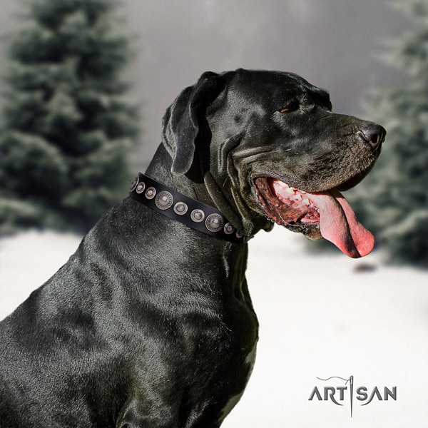 Great Dane perfect fit collar with fashionable studs for your pet