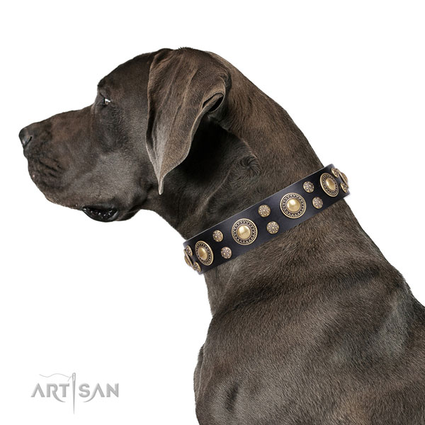 Great Dane fine quality full grain genuine leather dog collar for daily use