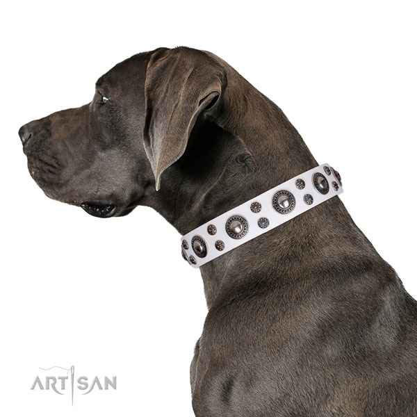 Great Dane fashionable genuine leather dog collar for fancy walking