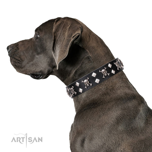 Great Dane remarkable full grain natural leather dog collar for comfortable wearing