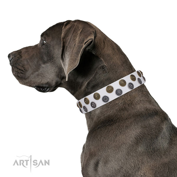 Great Dane convenient full grain natural leather dog collar for everyday use