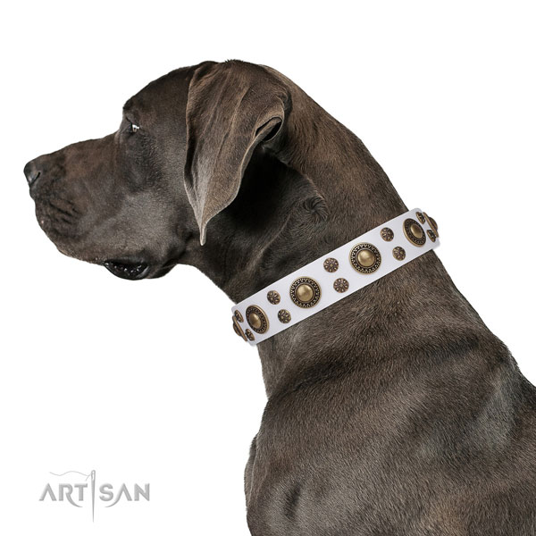 Great Dane convenient full grain leather dog collar for everyday use