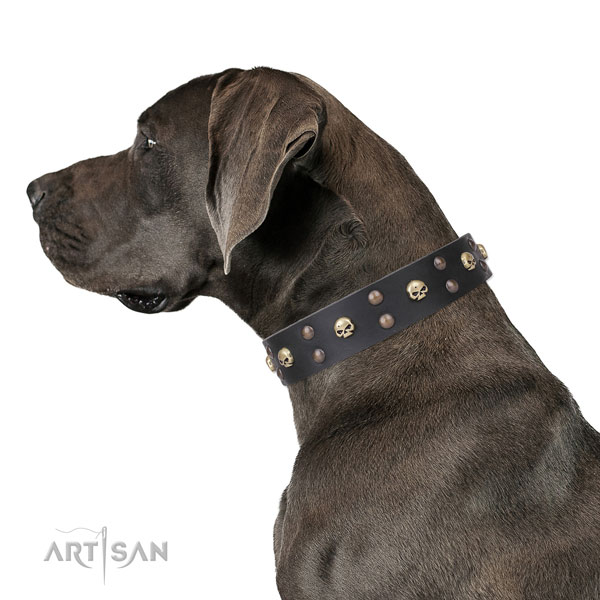 Great Dane easy wearing full grain genuine leather dog collar for stylish walking