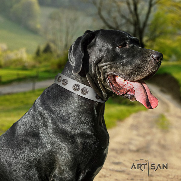 Great Dane basic training full grain leather collar with embellishments for your doggie