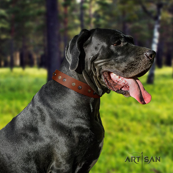 Great Dane easy to adjust collar with fashionable decorations for your pet