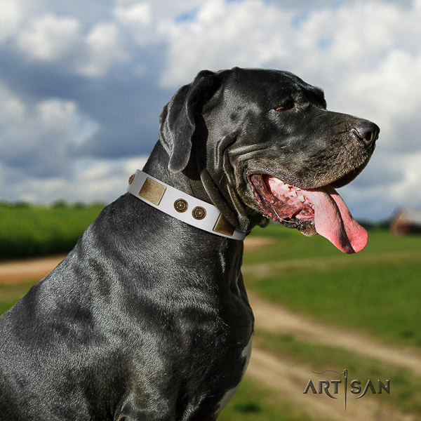 Great Dane daily walking genuine leather collar with studs for your pet