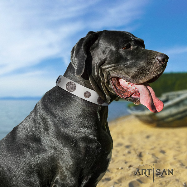 Great Dane fancy walking full grain natural leather collar with studs for your canine