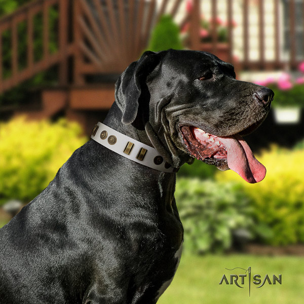 Great Dane unusual genuine leather collar with rust-proof hardware