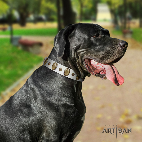 Great Dane comfortable wearing genuine leather collar with decorations for your doggie