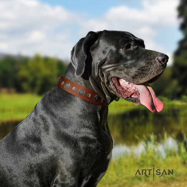 Great Dane trendy full grain leather collar with corrosion proof buckle