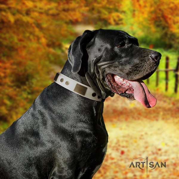 Great Dane adorned full grain natural leather collar with corrosion proof hardware