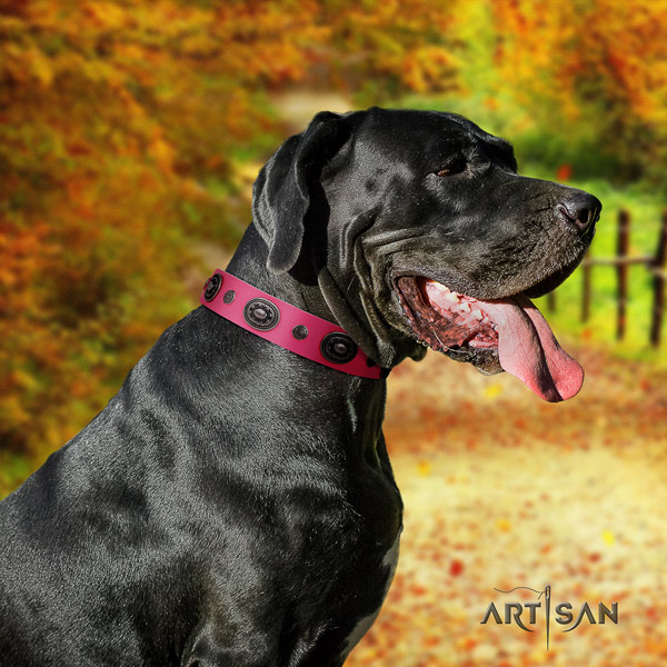 Great Dane top quality collar with unusual decorations for your canine