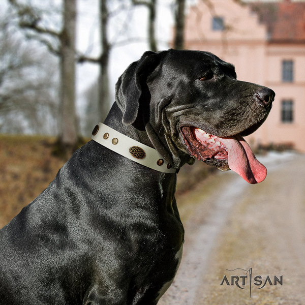 Great Dane top quality genuine leather collar with corrosion proof hardware