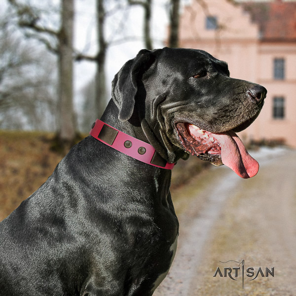 Great Dane fancy walking full grain leather collar with decorations for your four-legged friend