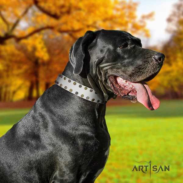 Great Dane daily use natural leather collar with decorations for your pet