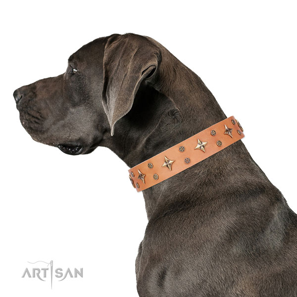 Great Dane impressive full grain leather dog collar for handy use
