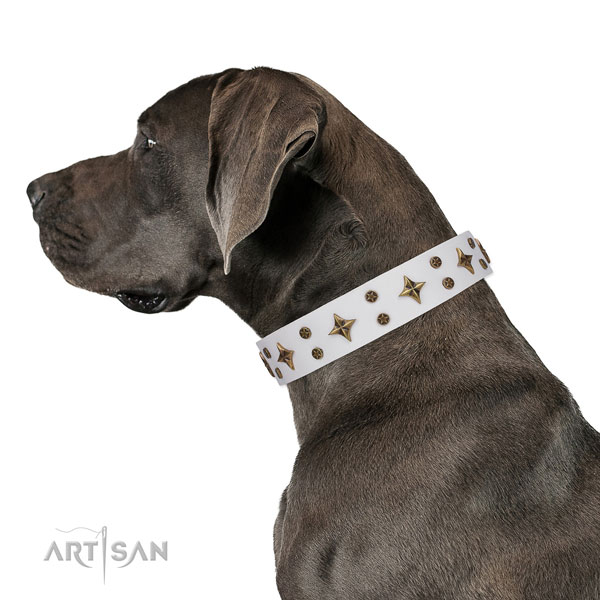 Great Dane best quality full grain genuine leather dog collar for everyday walking