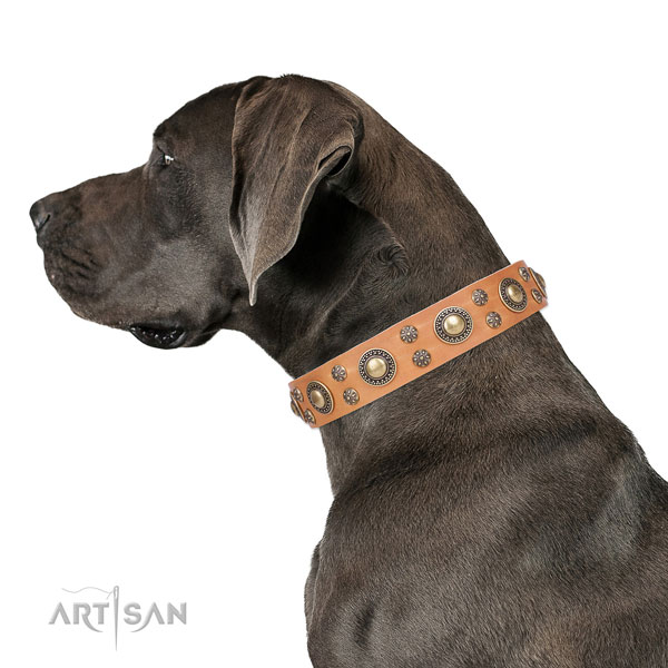Great Dane handmade natural genuine leather dog collar for walking