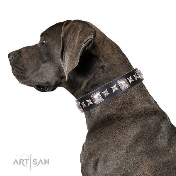 Great Dane best quality full grain natural leather dog collar for everyday use