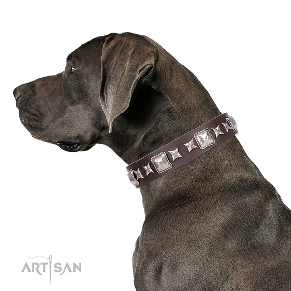 Great Dane stylish full grain natural leather dog collar for basic training