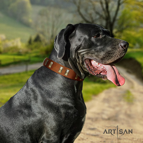 Great Dane comfy wearing genuine leather collar with decorations for your four-legged friend