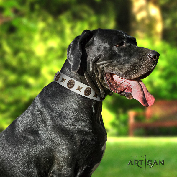 Great Dane fancy walking genuine leather collar with adornments for your four-legged friend