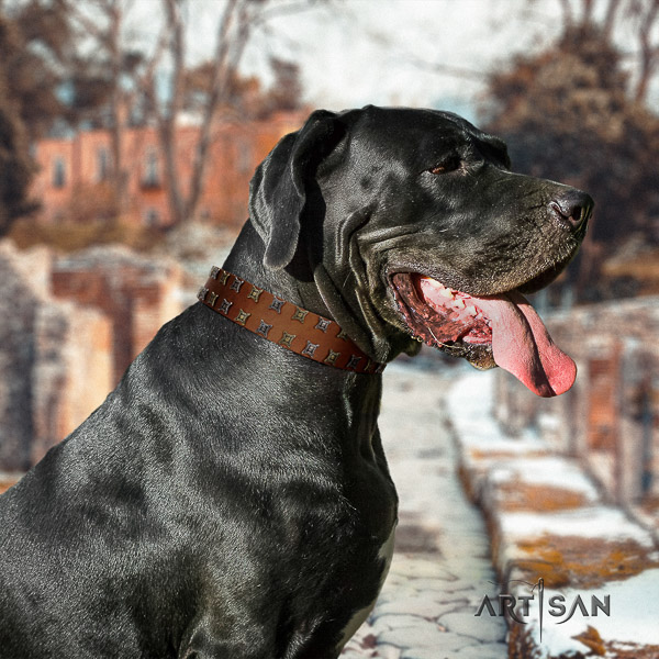 Great Dane stylish walking leather collar with embellishments for your four-legged friend