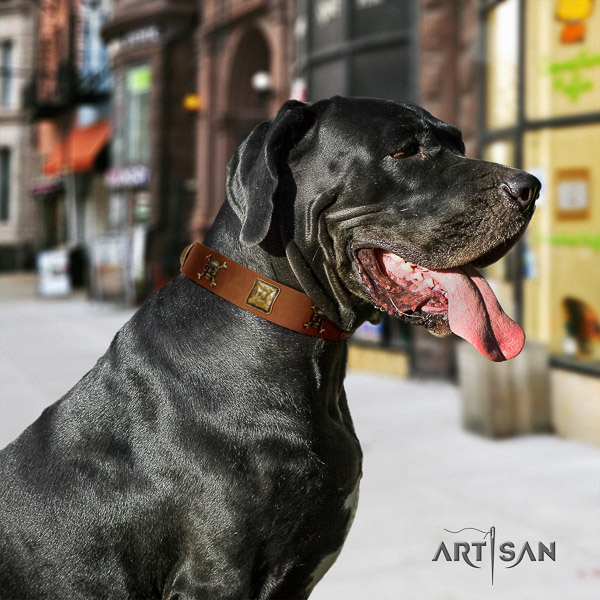 Great Dane comfortable wearing full grain genuine leather collar with adornments for your canine