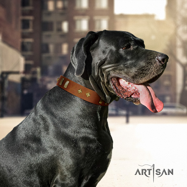 Great Dane daily walking full grain natural leather collar with studs for your doggie