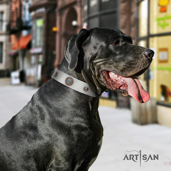 Great Dane everyday walking leather collar with studs for your dog