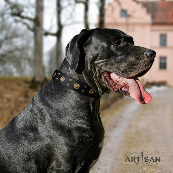 Great Dane exceptional full grain natural leather collar with rust resistant fittings