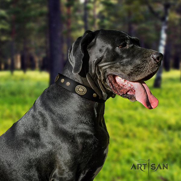Great Dane amazing full grain natural leather collar with corrosion proof fittings