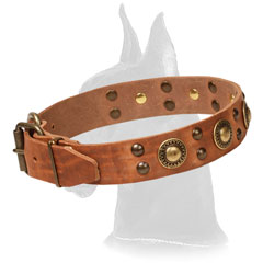 Tan Genuine Leather Collar for Great Dane Walking