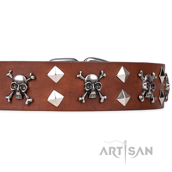 Daily leather dog collar with incredible embellishments