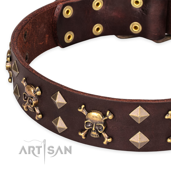 Day-to-day leather dog collar with amazing adornments