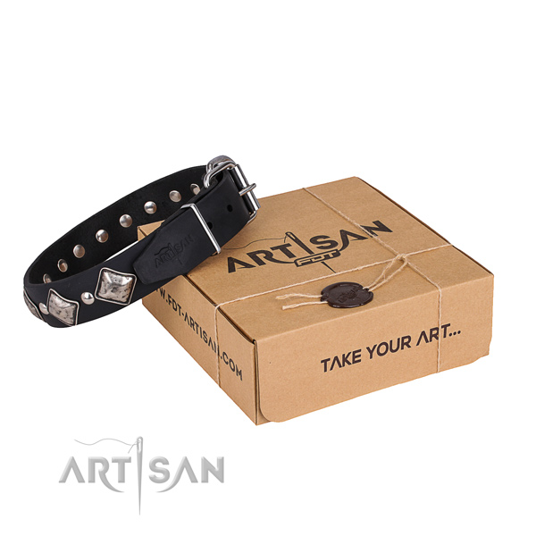 Casual leather dog collar with sensational studs