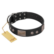 """Square Stars"" Modern FDT Artisan Black Leather Great Dane Collar with Square Plates and Studs"