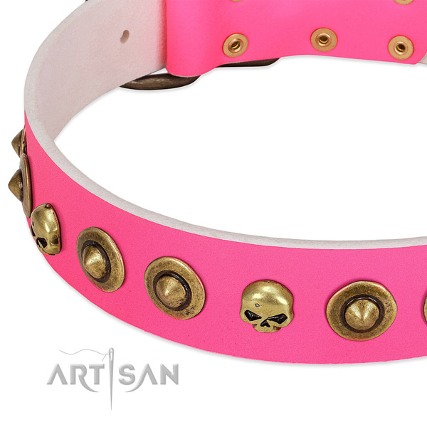 Significant studs on leather collar for your dog