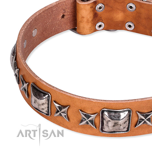 Fancy walking adorned dog collar of top notch full grain natural leather