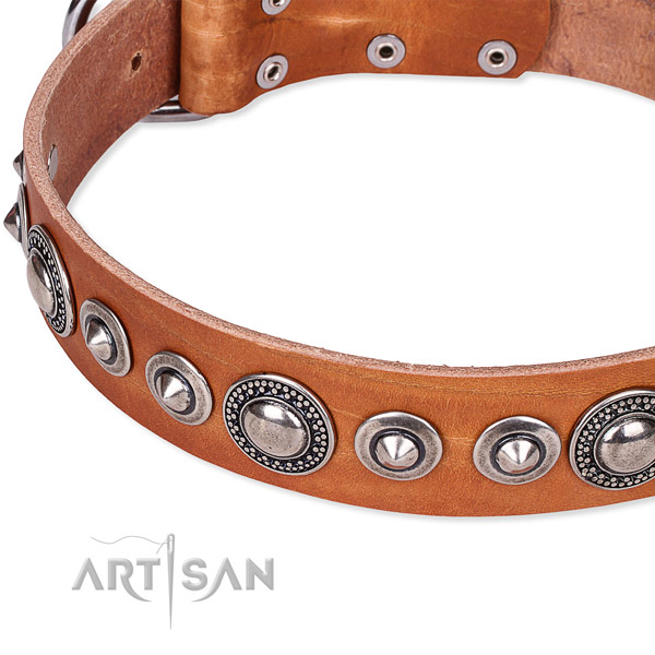 Everyday walking adorned dog collar of finest quality full grain leather