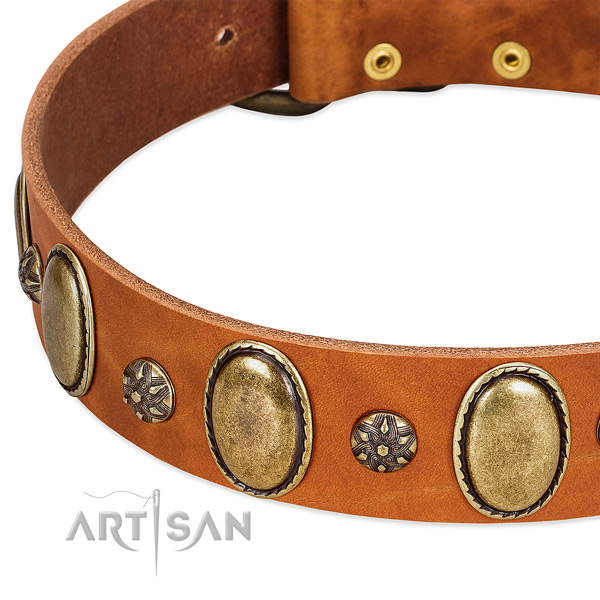 Fancy walking top rate full grain leather dog collar